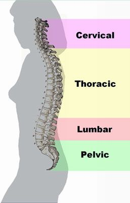 Woman spine with natural curves for better posture