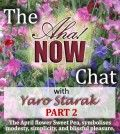 Interview with Yaro Starak Part 2