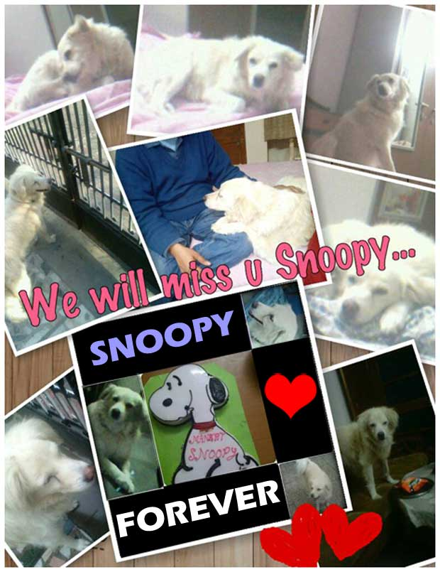 Pictures of our dog Snoopy who died
