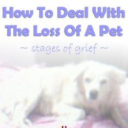 My Experiences of Coping with the Loss of A Pet Dog - A Tribute to Snoopy