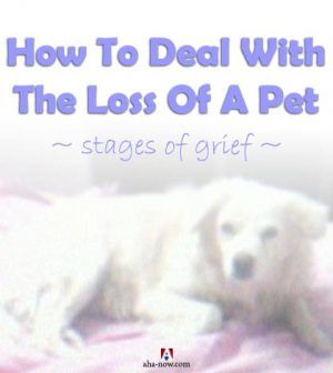How to deal with the loss of a pet