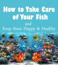 A fish tank with different fishes and text how to take care of fish