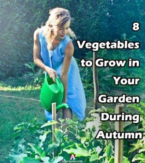 8 Vegetables To Grow In Your Garden During Autumn Aha Now
