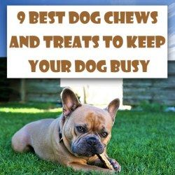 9 Best Dog Chews and Treats to Keep Your Dog Busy