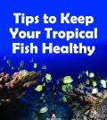healthy tropical fish in the sea